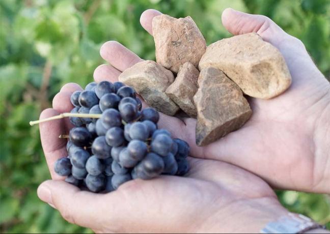 Piedras y uvas del terruño de Vinos del Viento
