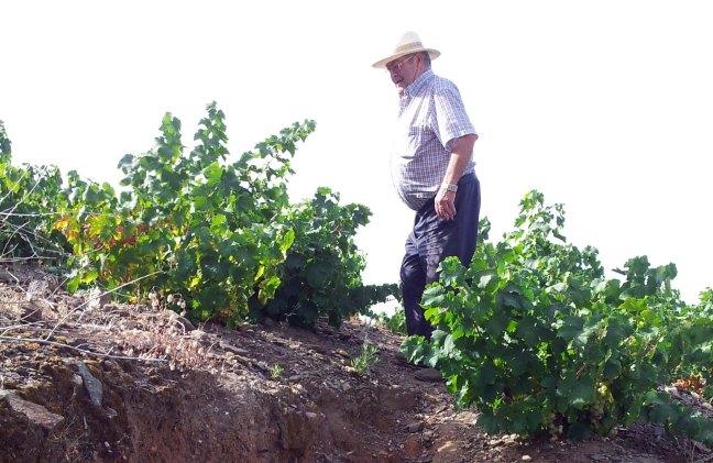 viticultor viña verano