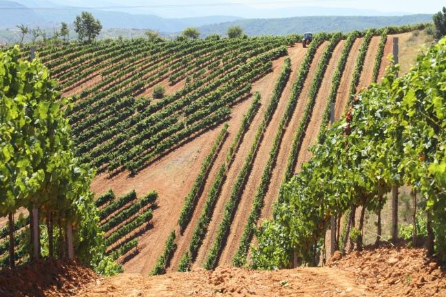 Viñas de Bodega del Abad
